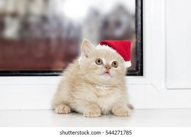 little kitten in Christmas hat on a window sill