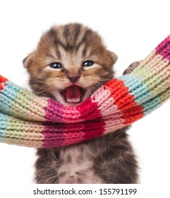 Little kitten clings on the knitted scarf isolated on white background