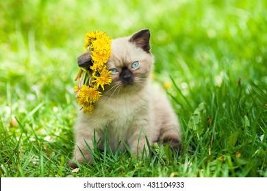 Little kitten crowned dandelion chaplet walking in the grass