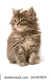 Little kitten with daisy flower isolated on white background