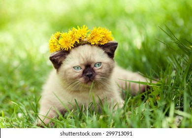 little kitten in the dandelion flowers in sunny day