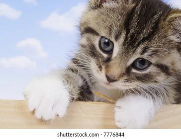 A little kitten - fluffy pets