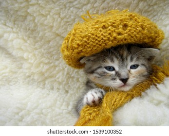 A little kitten in a hat and scarf wrapped himself in a plaid. Sleepy kitten.