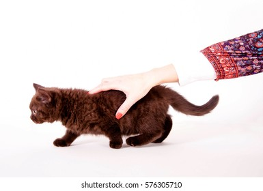 Little kitten is hold by a woman's hand