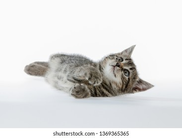 little kitten isolated on white studio shot lying down looking up