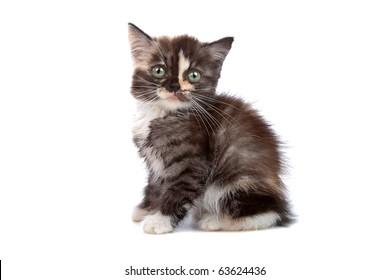 little kitten isolated on white