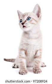 Little kitten isolated on the white background
