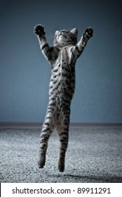 Little kitten jumping with widely spread paws