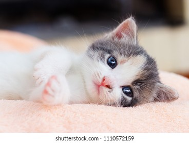 little kitten lies comfortably on a fluffy blanket