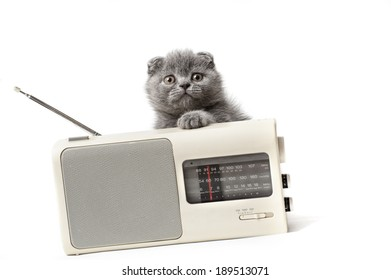 Little kitten listening to radio