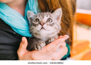 little kitten looking up. girl holds a cat in her arms