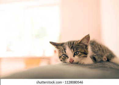 Little kitten lying on a coverlet. Small cat sleeps sweetly as a small bed. Sleeping cat in home on a blur light background. Cats rest after eating.