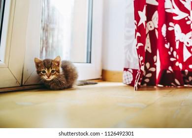 Little kitten near balcony door