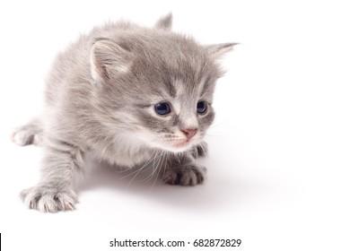 Little kitten on clean white background