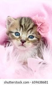 little kitten in a pink blanket with a flower