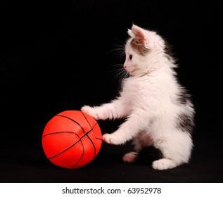 little kitten play with a basketball ball