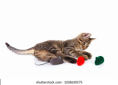 Little kitten is played with a red, gray and green toy mouse on a white background