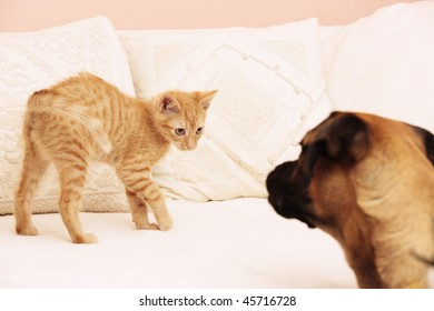 Little kitten playing with dog on a white sofa