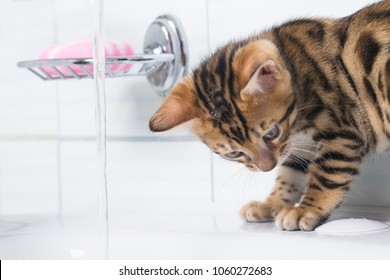 little kitten playing with water in the bathroom