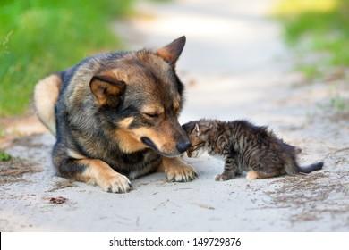 Little kitten pressed against the big dog