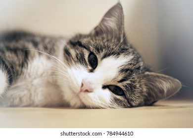 Little kitten rest on a table. Small cat sleeps sweetly as a small bed. Sleeping cat in home on a blur light background. Cats rest after eating.