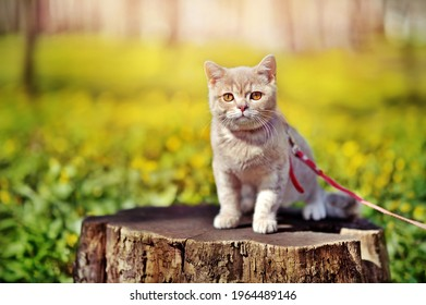Little kitten sitting on the stump against blooming spring meadow