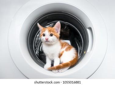 Little kitten sitting in a washing machine door
