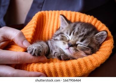 Little kitten sleeping in the hands at orange background
