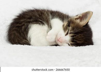 little kitten sleeping on a soft blanket