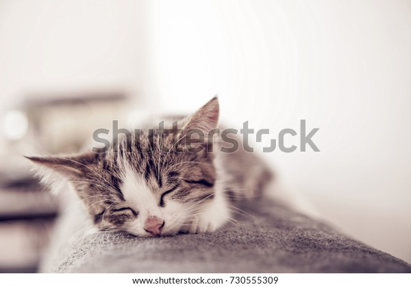 Little kitten sleeps on a coverlet. Small cat sleeps sweetly as a small bed. Sleeping cat in home on a blur light background. Cats rest after eating.