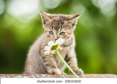 Little kitten smelling a flower