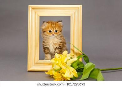 Little kitten in wooden photo frame, on a gray background