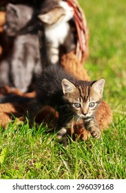 Little Kittens in a basket on the grass,