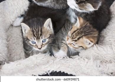 little kittens in a box