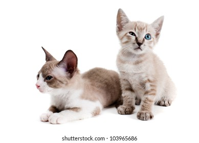 Little kittens isolated on the white background