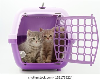 little kittens in a pet carrier on a white background