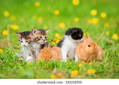 Little kittens with rabbits sitting on the lawn