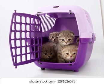 little kittens sit in a pet carrier.