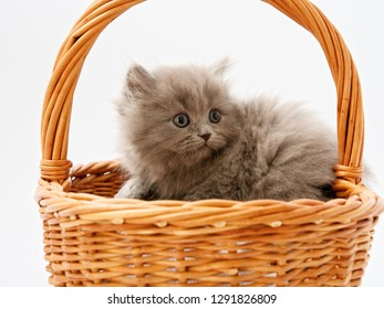 little kittens are sitting in a basket of wicker