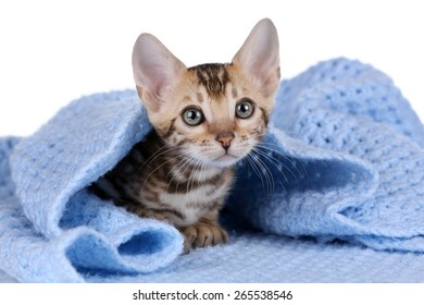 Little kitty with big eyes laying on a blue blanket
