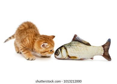 Little kitty and  fish carp, isolated on white