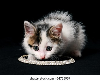 little kitty sniffing necklace