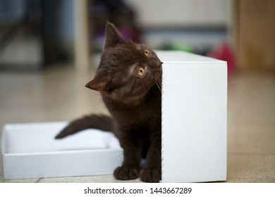 little kitty stands near the white cardboard box and nibbles it