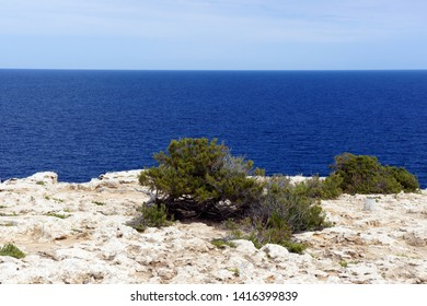 Little known places of the island of Ibiza. Punta del Gost. Only sea and juniper growing on the old lava.