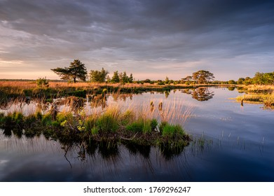 Little lake and moorland in national park Dwingelderveld, the Netherlands with beautiful trees an sunset