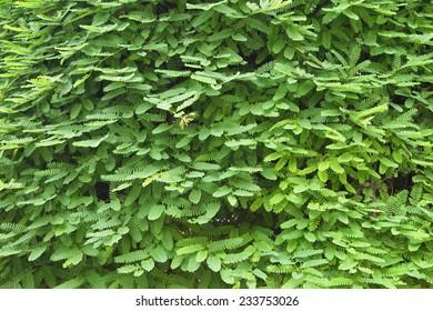 Little leaf background