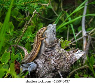 Little lizard on the branch, green background