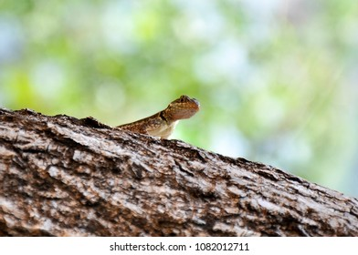 Little lizzard. Photo taken in Misiones, Argentina.