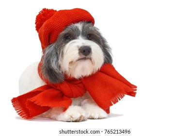 a little long-haired dog on a white background