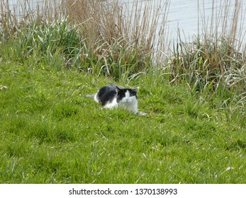 little lovely black and white cat in the fields at a riverbench